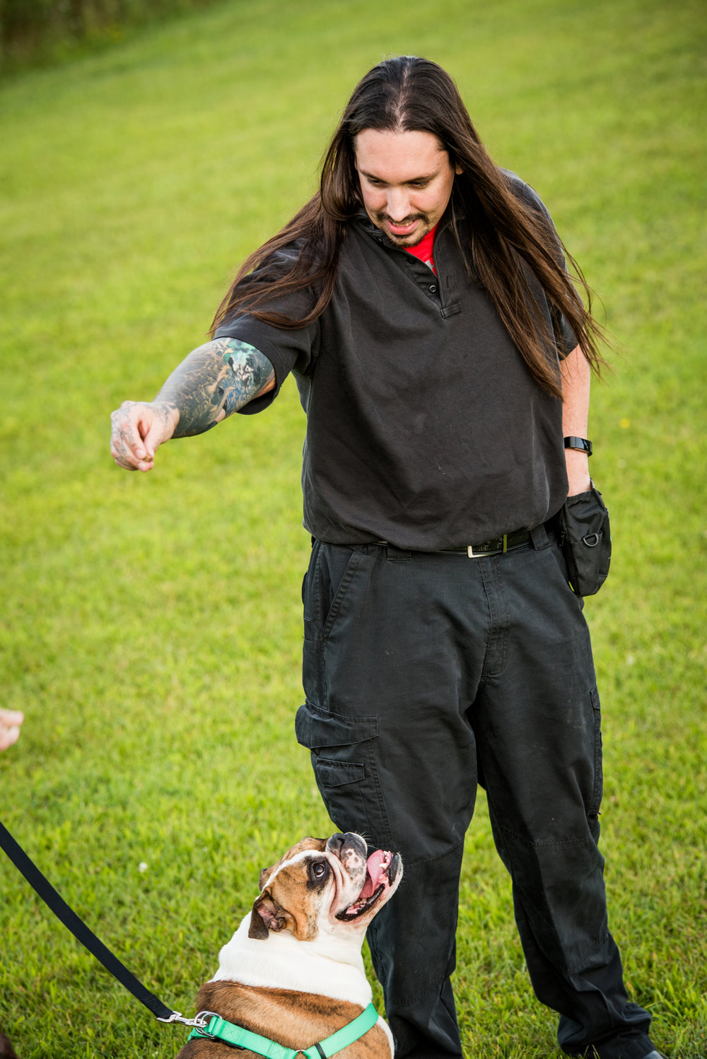 Day Training Saratoga County Ny Certified In Home Dog Training