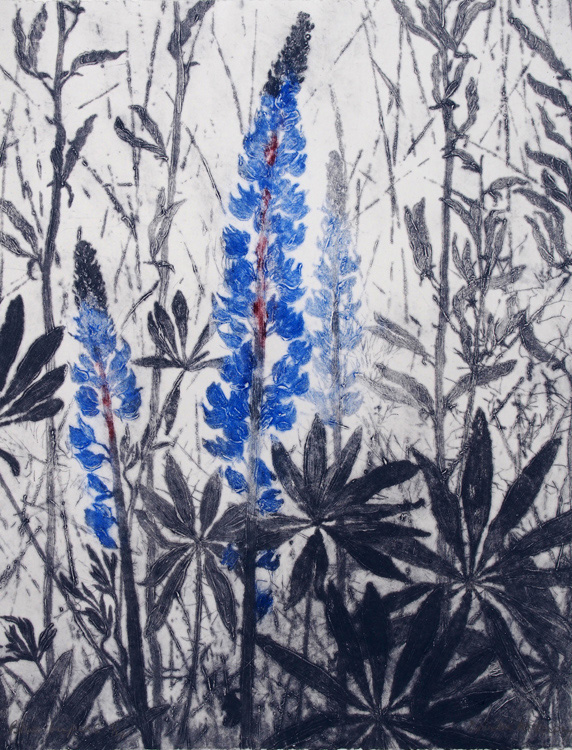 Blue Lupins