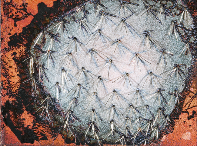 Silver Cactus IV