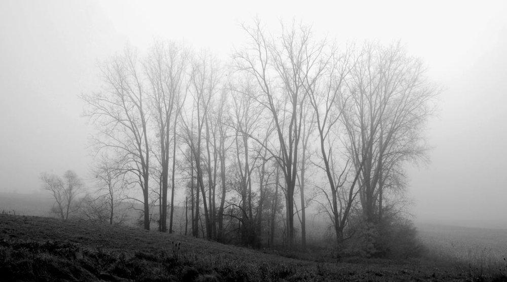 Mist 20x36-1.jpg