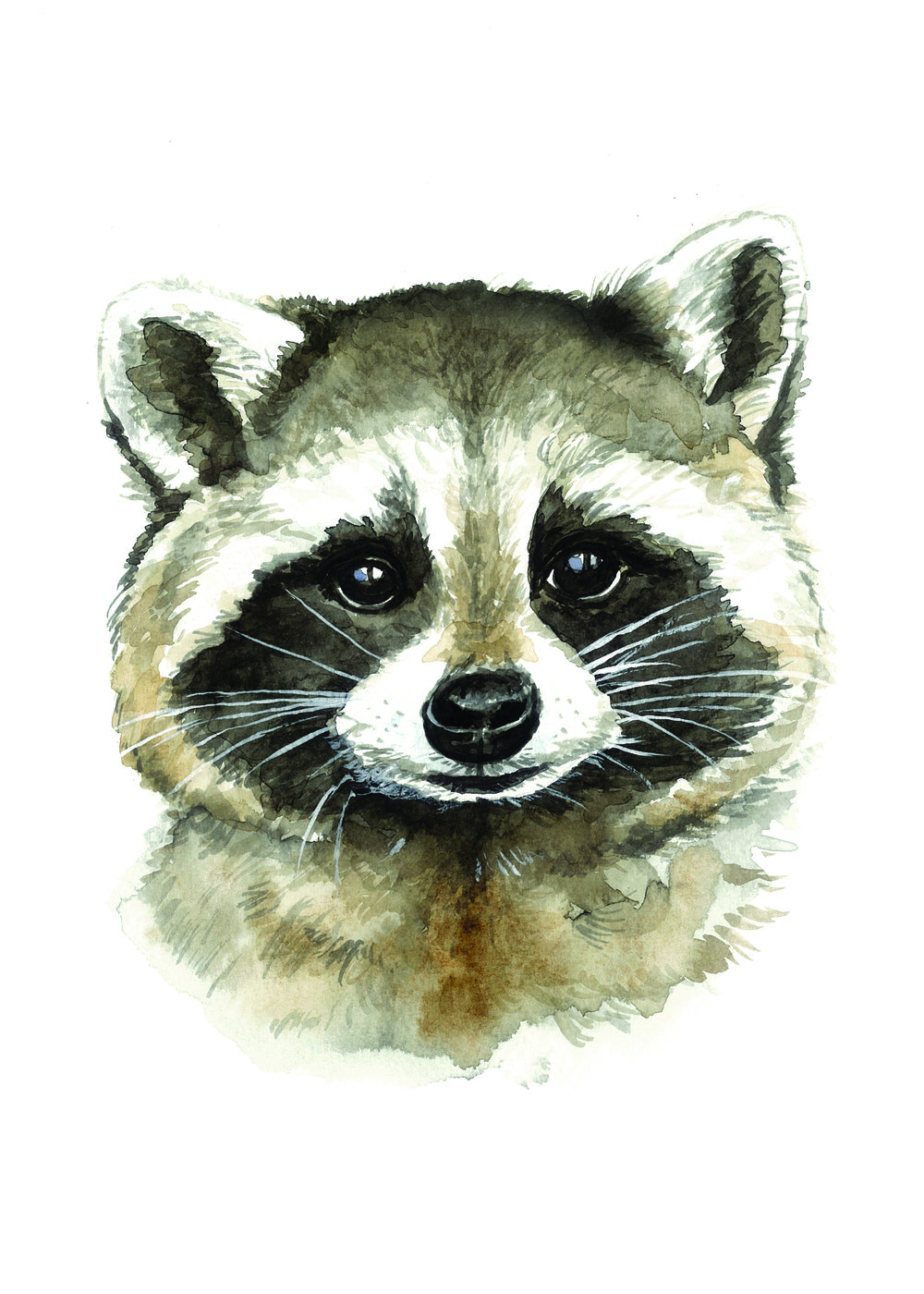 Raccoon_Portrait.jpg