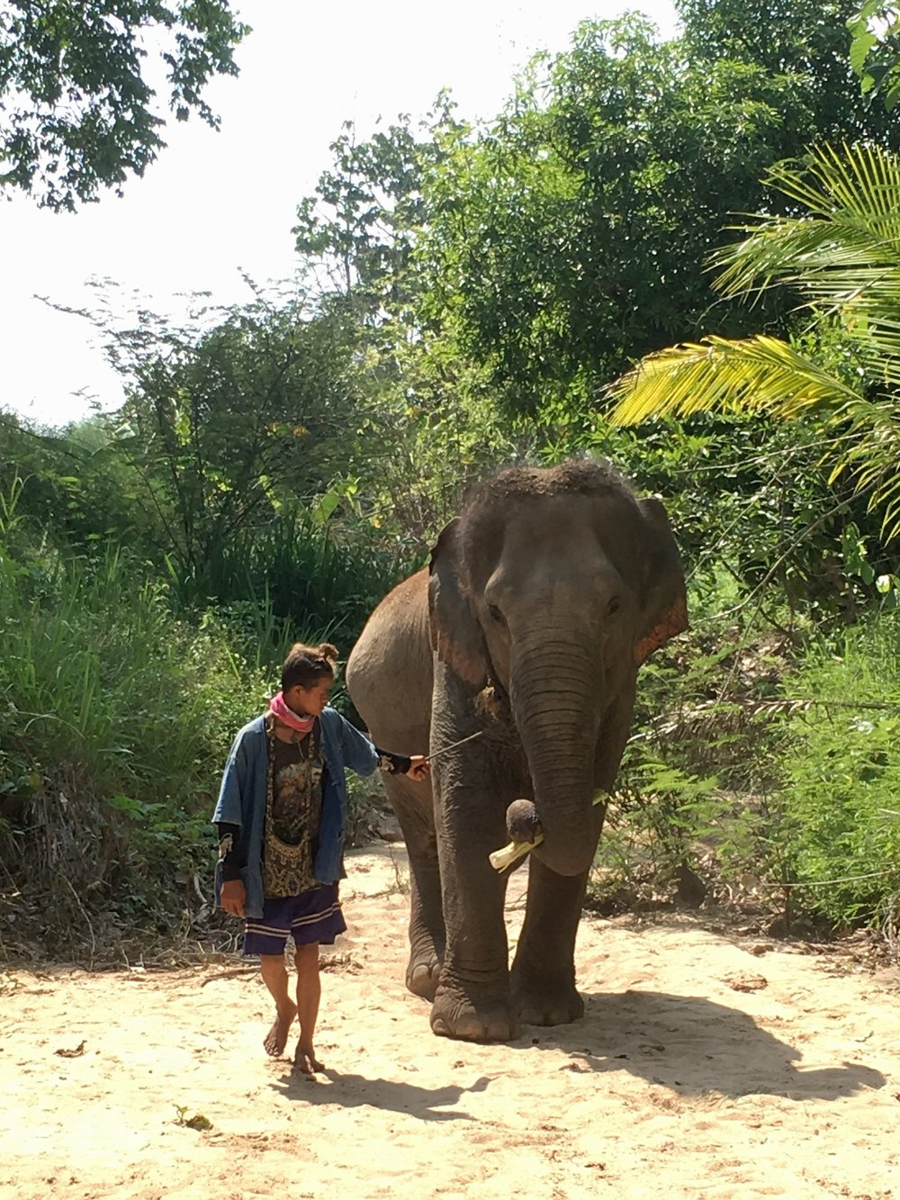 Mae Keaw and her young mahout.