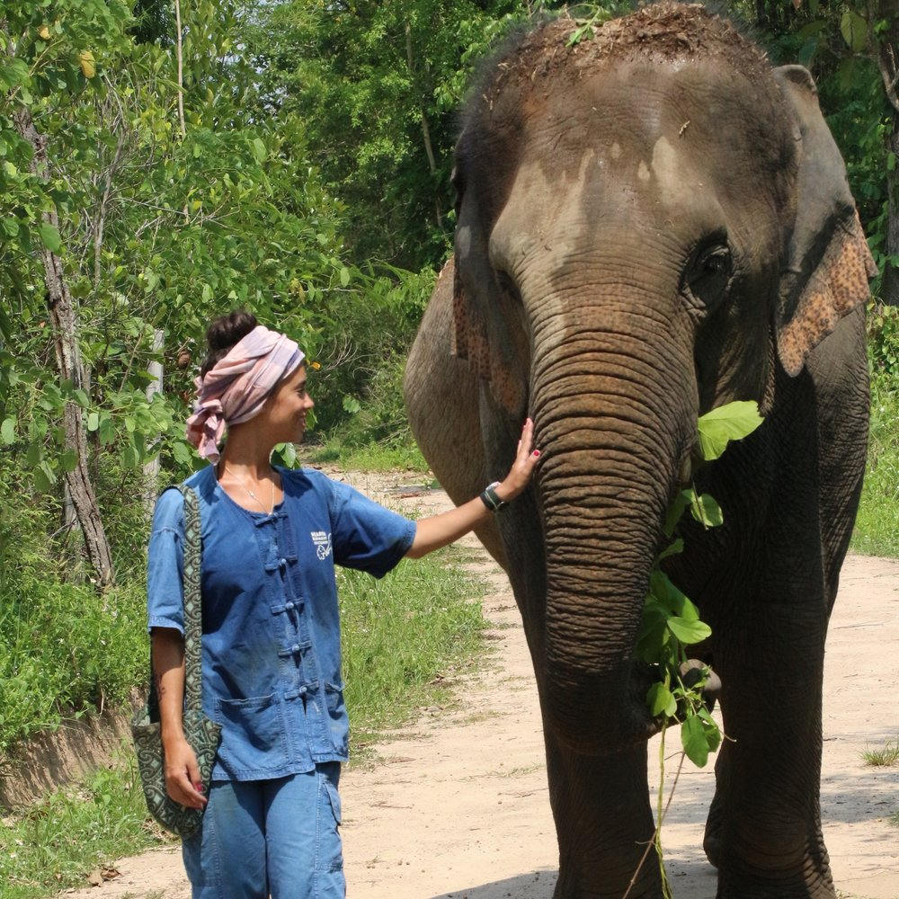 b440f6b3cb51 Caring for Elephants in Chiang Mai — Roam The World At Will