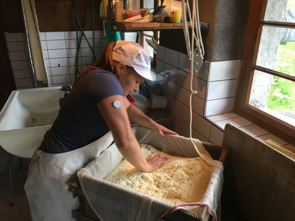 pressing and forming the young cheese