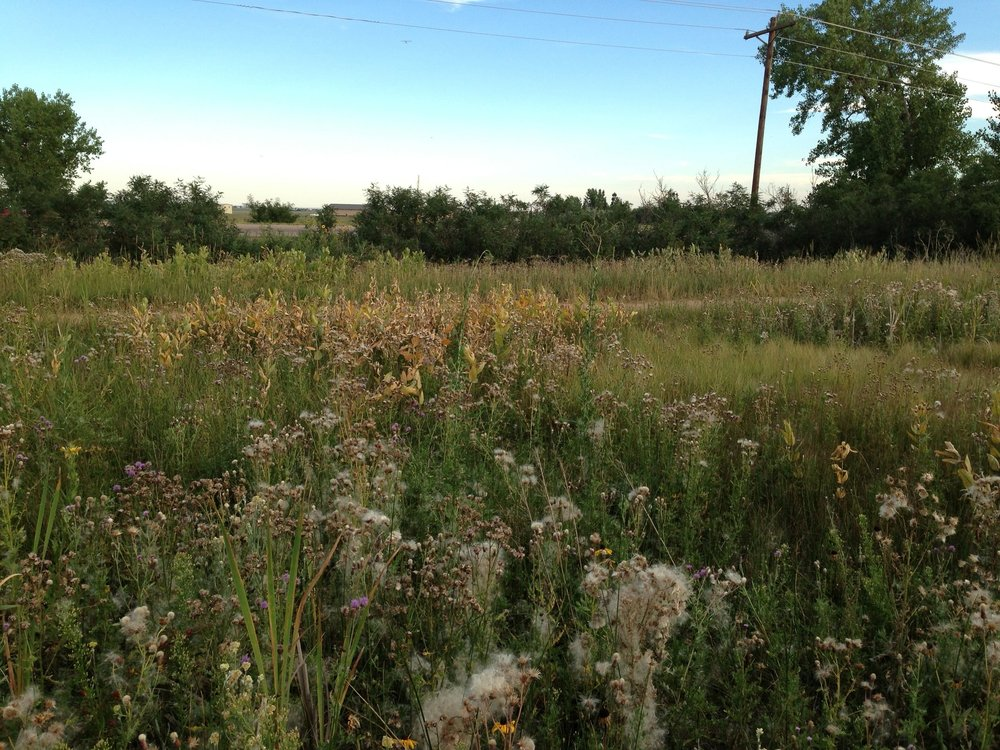 Golden West Wind Energy Project - Wildlife Surveys