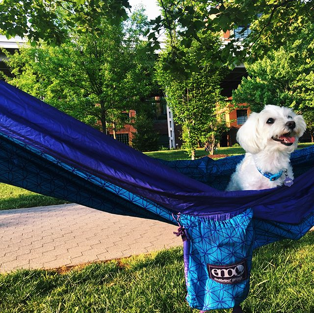 The dog days of summer are on their way 🔆🐶🐾🌀✨ Also if your in NYC go check out my friend's new puppy cafe @borisandhorton in LES, ask for Coppy!  #tlc #supportsmallbusiness #eno #enohammock #🌍 #enonation