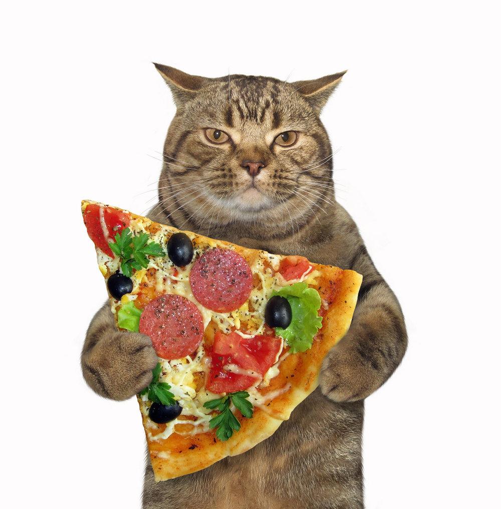 Un gato comiendo pizza.