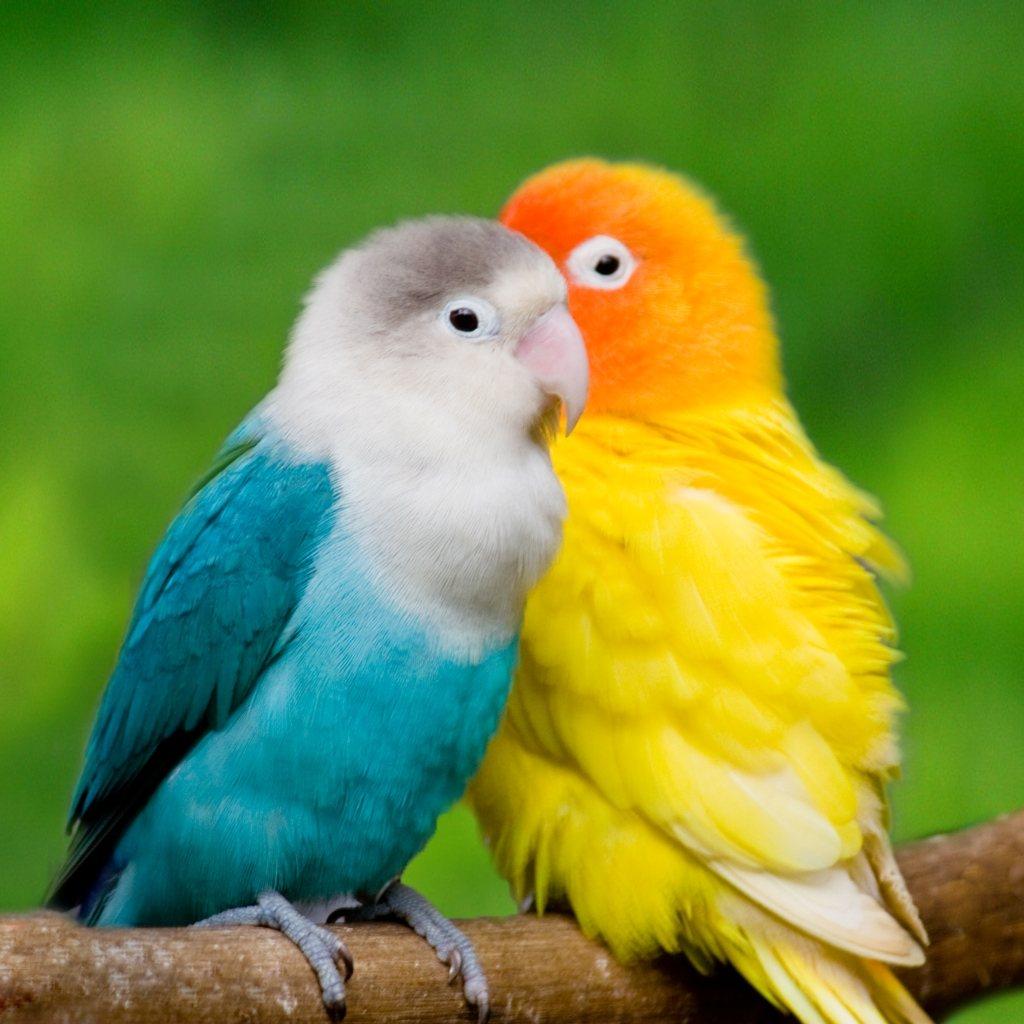 two birds in a bush
