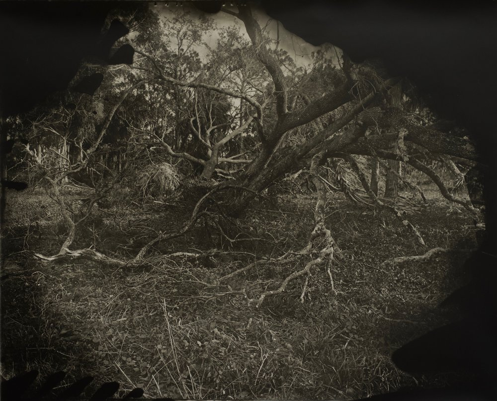 After The Storm,  37 in. x 30 in., collodian negative hand printed on Fomatone paper, 2018.