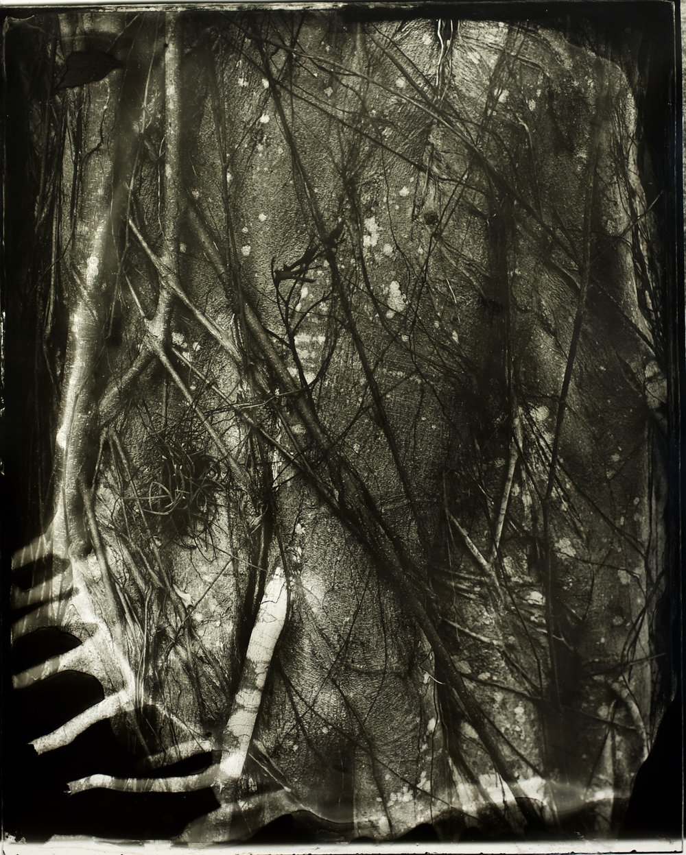 Implicāre,  30 in. x 37 in., collodian negative hand printed on Fomatone paper, 2018. #2018-7.(Slighly lower contrast than #6.).jpg