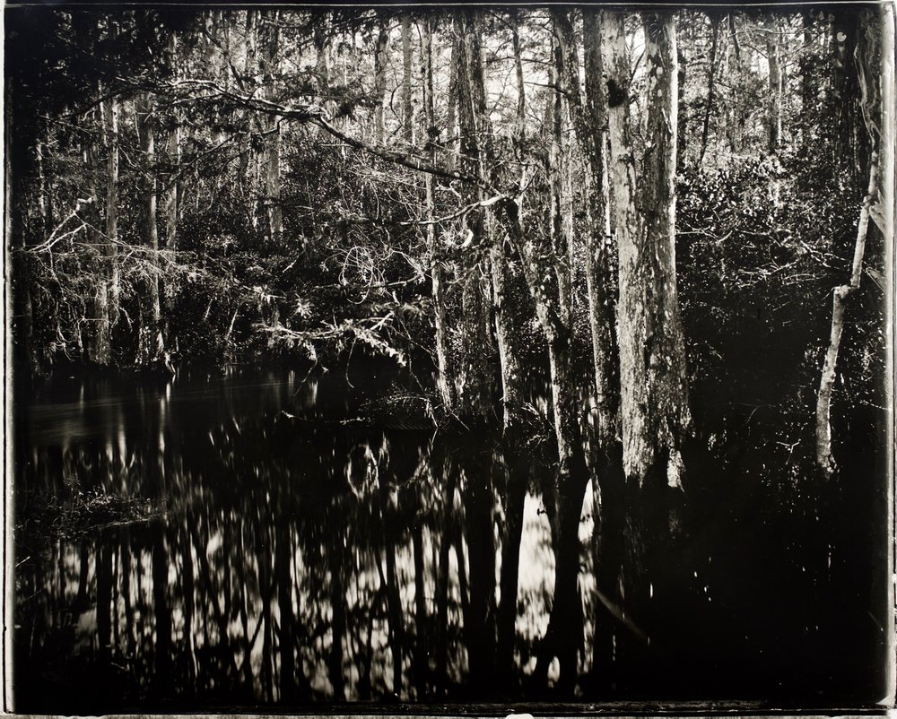 Reverse Focus Everglades,  37 in. x 30 in., collodian negative hand printed on Fomatone paper, 2018.