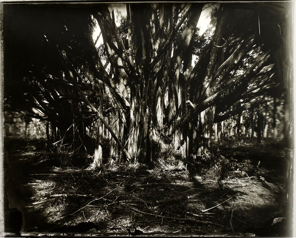 The Sacred and the Mundane , 36 in. x 29 in., collodian negative hand printed on Fomatone paper, 2018.