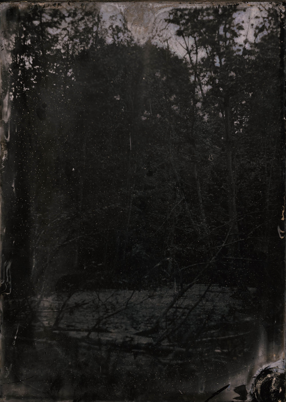 A Nest For Memory, ambrotype original, archival pigment print, 40 in. x 50 in., 2018