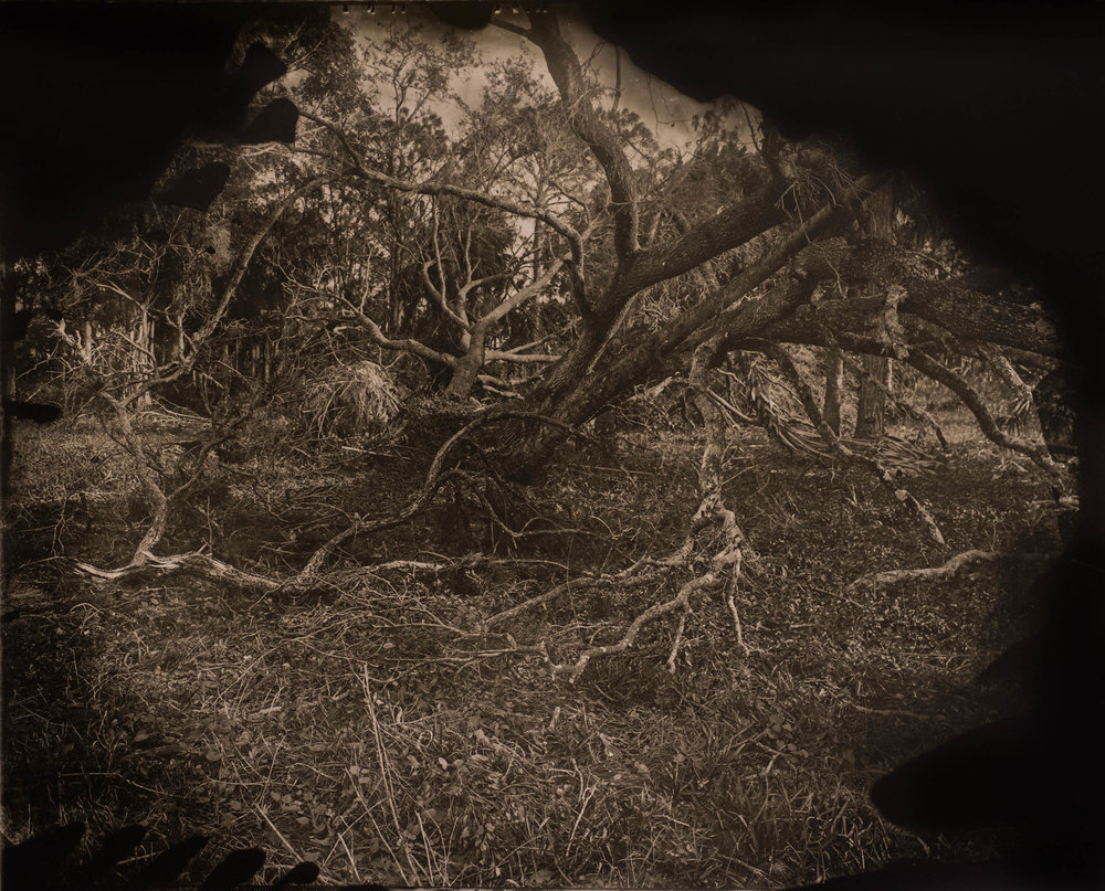 After The Storm, ambrotype original, archival pigment print, 50 in. x 40 in., 2018