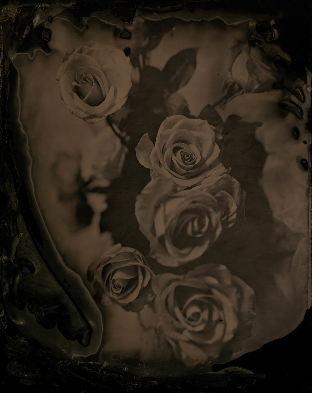 The Roses, ambrotype original, archival pigment print, 40 in. x 50 in., 2018