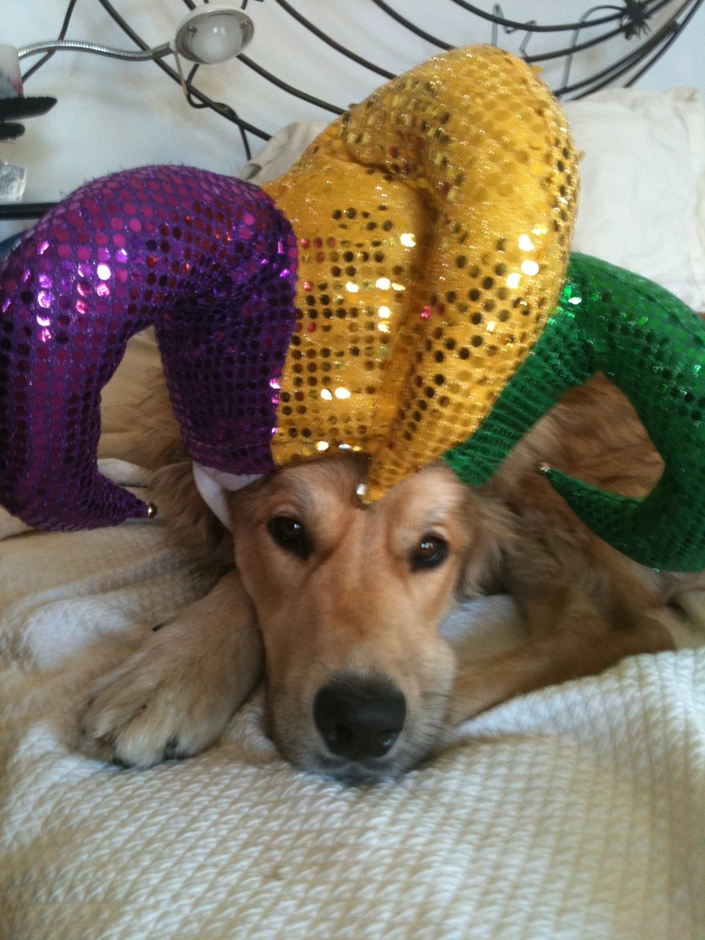 MARDI GRA DOG! LOVE IT.JPG
