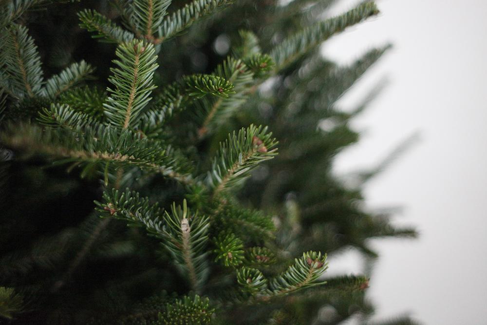 the christmas season    schedule