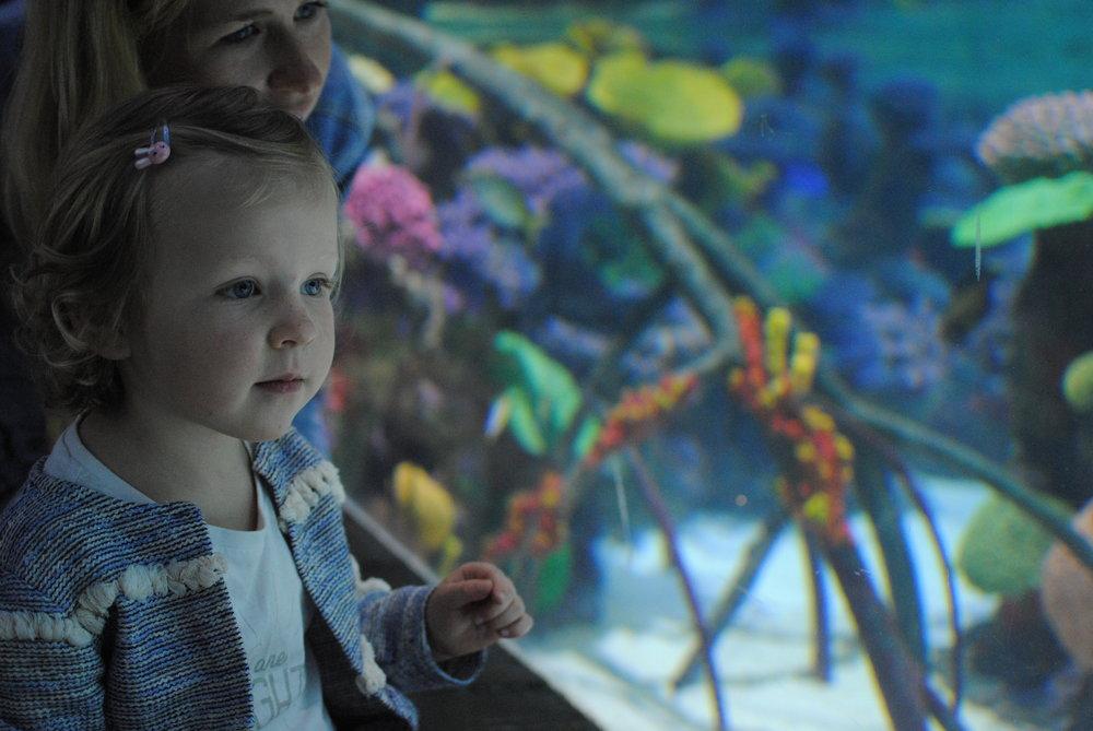 """Sienna est tombée sous le charme de l'aquarium dès qu'elle a vu """"Dory!!"""" !"""
