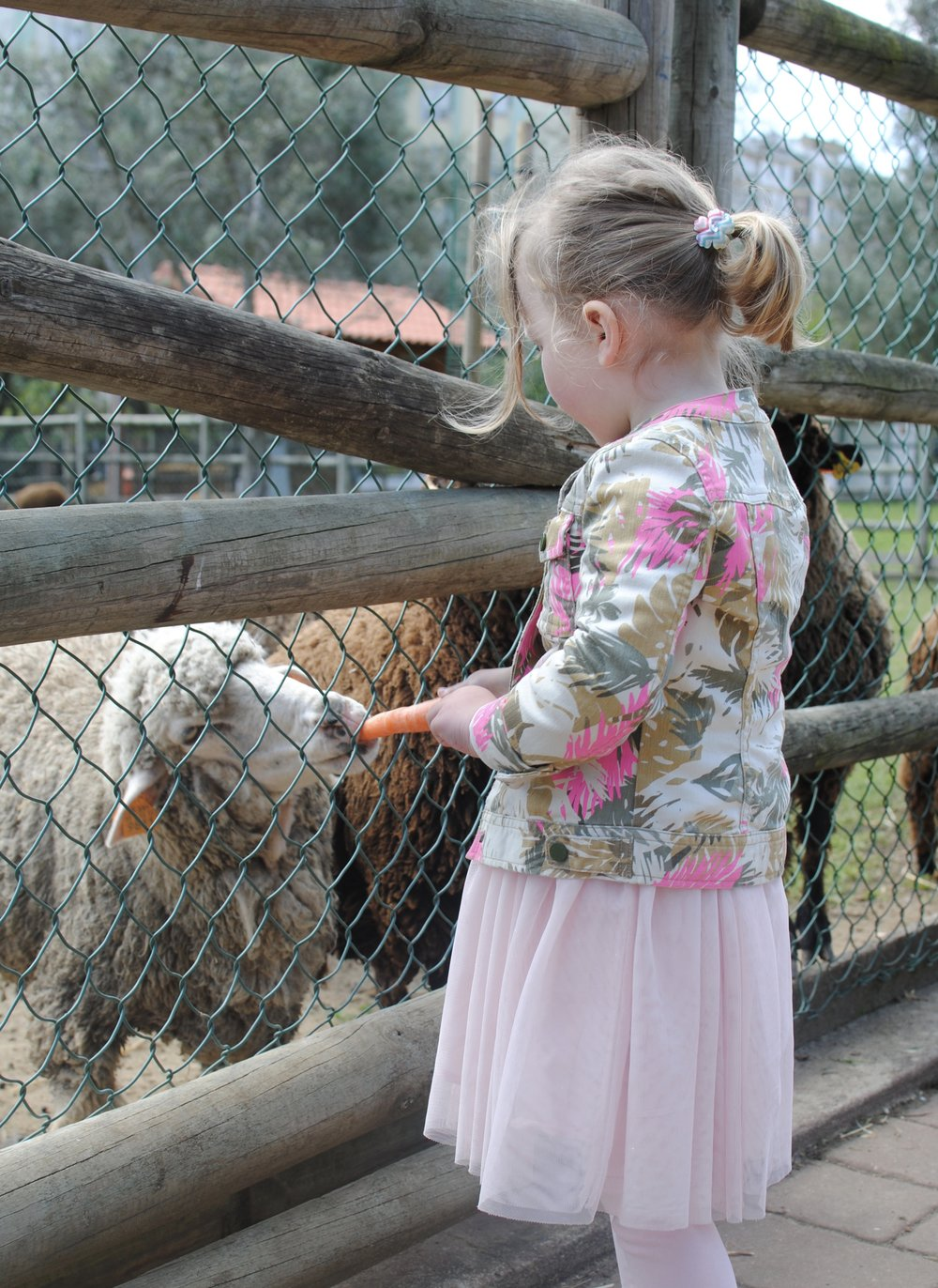 We always visit the Quinta armed with fresh carrots and apples but we saw a sign last time requesting visitors to not feed the animals!