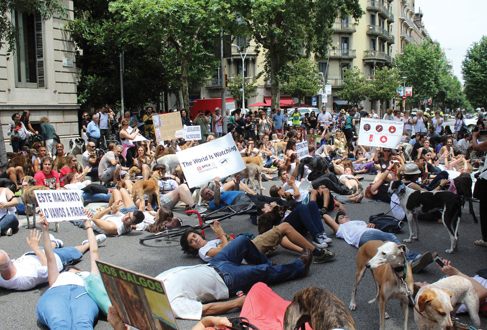In 2015 SPCA International protested, marched and activated tens of thousands of voices to cry out against the seemingly endless torture of Spanish Greyhounds.
