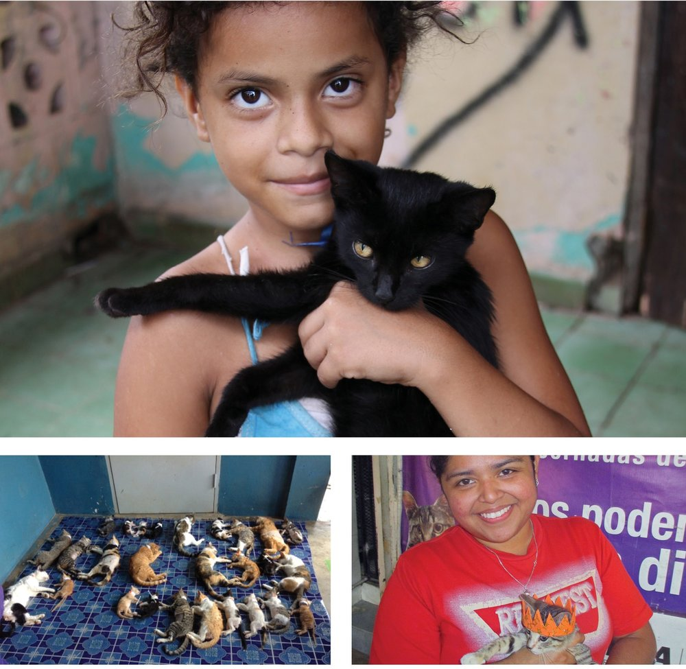 "Clockwise from top: A young Panamanian girl holds the kitten she brought for sterilization surgery. Without Spay Panama's services, her family could not afford this critical preventative measure, Spay Panama's 100,000th sterilization – Kitten was named Luz Esperanza meaning ""light of hope"", cats recovering from sterilization surgery."