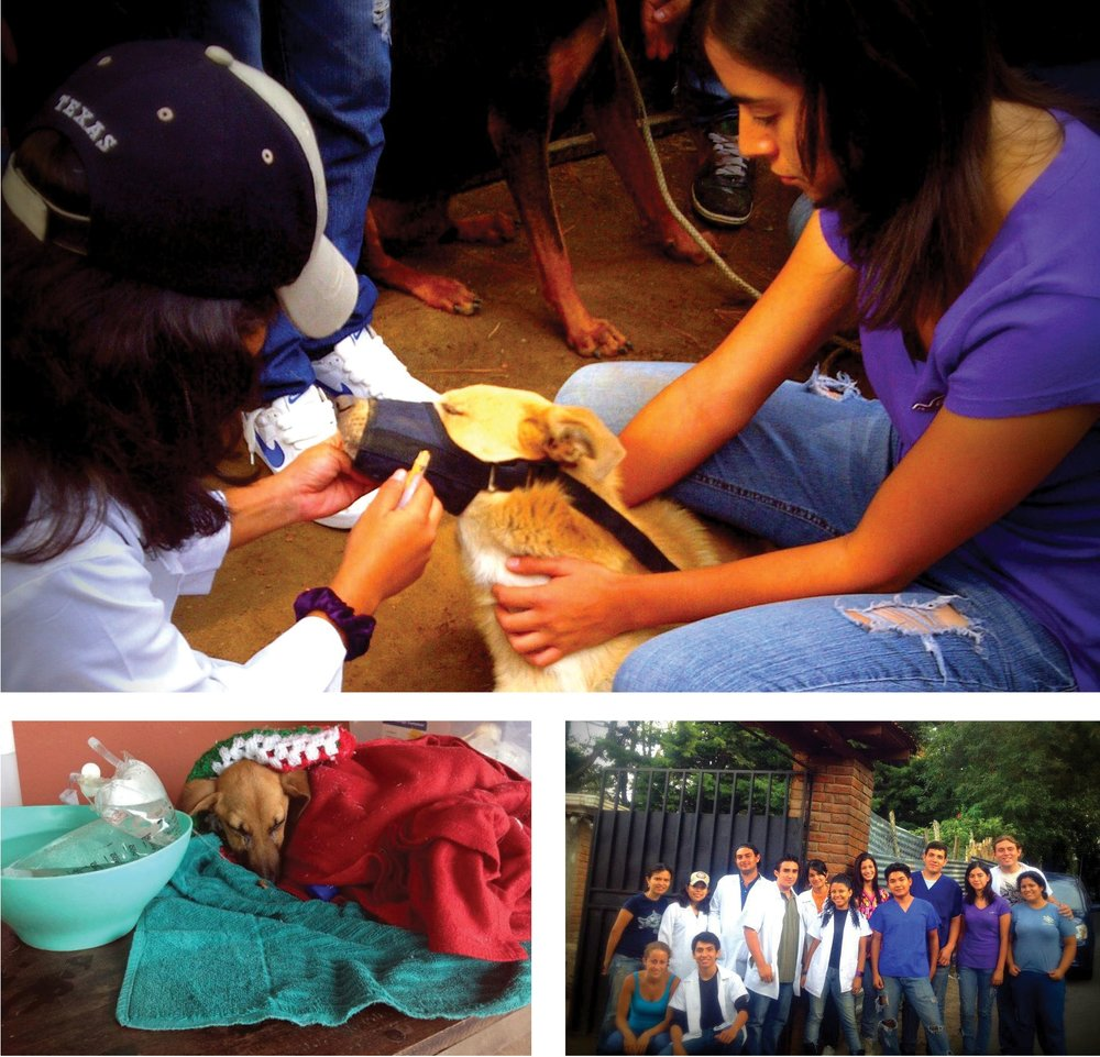Clockwise from top: El Santuario volunteer treats a dog during a local clinic, El Santuario de Animales activists stand outside the shelter's entrance for a group photo after a long day helping the local community animals, rescued puppy gets warm while receiving life-saving fluids.