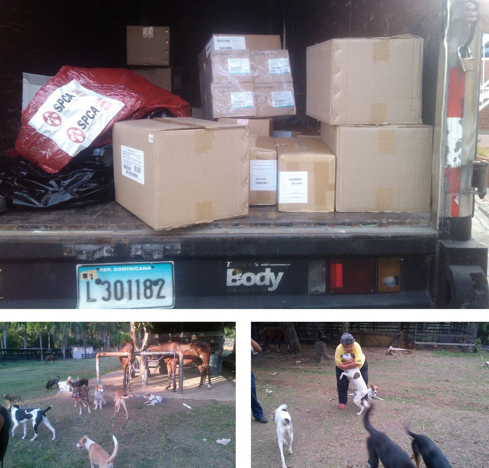 Clockwise from top:SPCA International veterinary aid supplies arrive at Sociedad Protectora de Animals Internacional in Dominican Republic, a resident dog gets hugged by a local activist, shelter grounds with rescued horses and dogs.