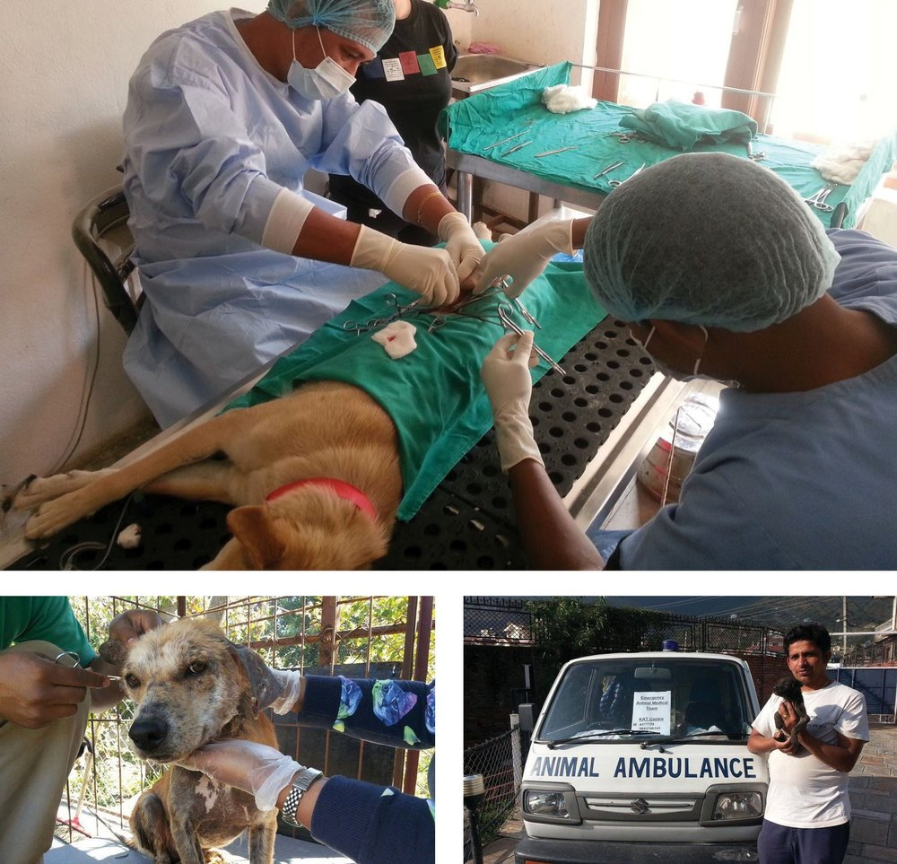 Clockwise from top: Kat Centre workers operate on a dog in their care, animal activist holding a recent rescue stands beside KAT Centre medical transport vehicle, dog with a severe case of mange receives help.