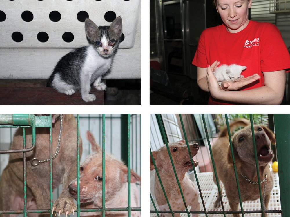 Clockwise from top left: Kitten suffering from eye infection considers the camera, SPCAI executive director holds a kitten during her visit to the CARA in 2014, dogs suffering from mange undergo treatment and bark at passing shelter visitors.