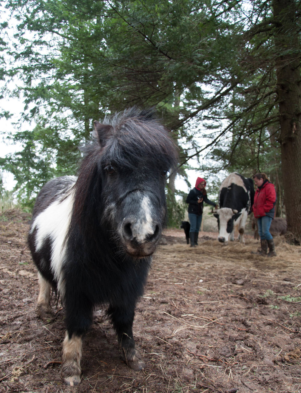 Pony at RASTA.jpg
