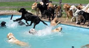 dogs in pool.jpg