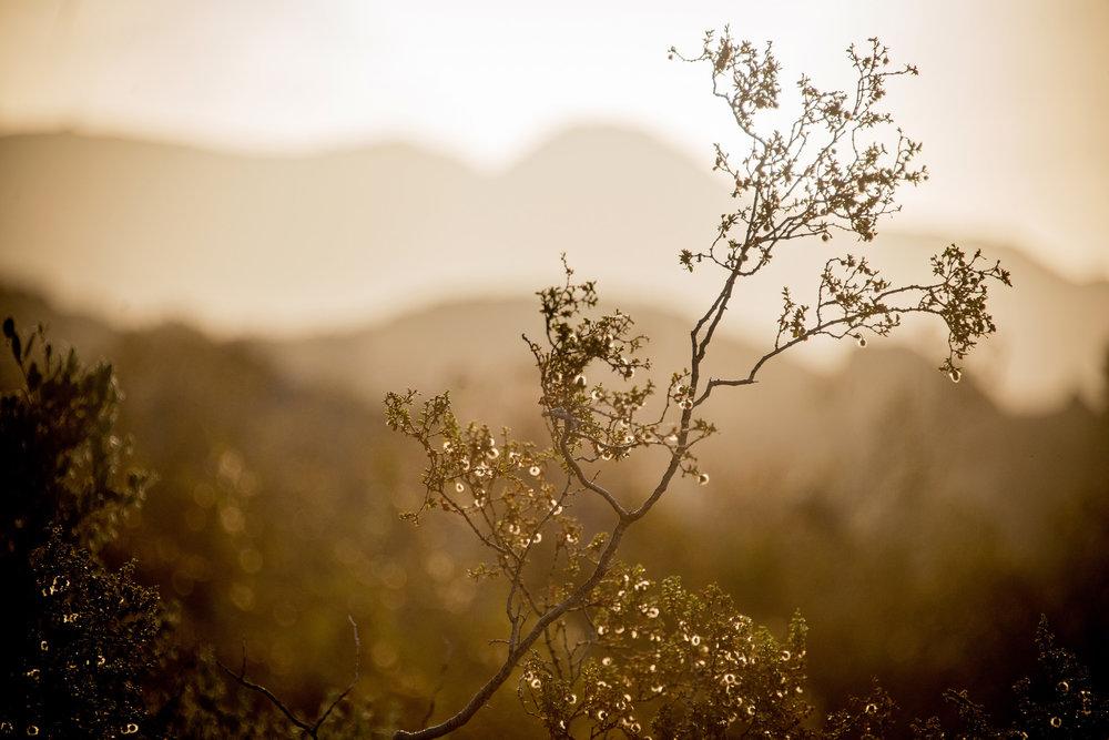 Britt_Nemeth_Studios_PhotographyNature_Spaces_Places_Vaction_Travel003.jpg