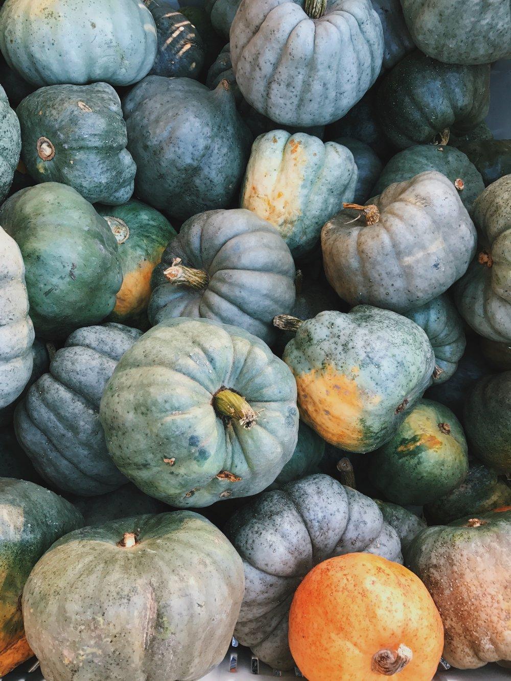 Pumpkin Patches in Washington -