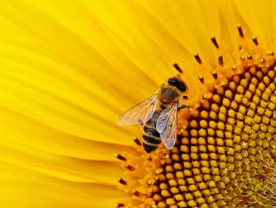 sun-flower-1643794_960_720.jpg