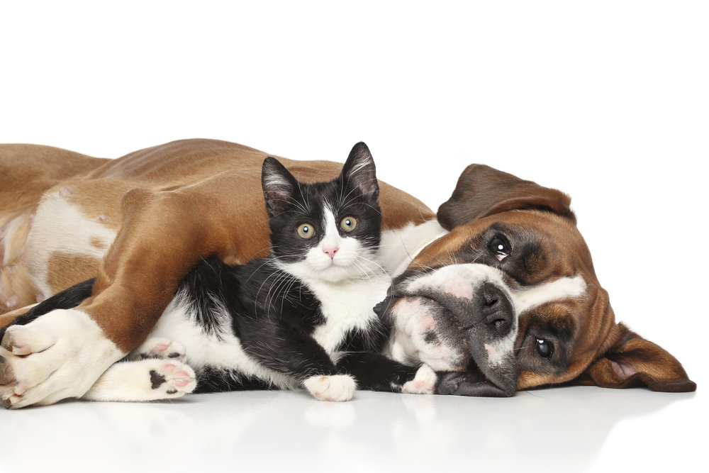 Cat-and-dog-together-000056628486_XXXLarge.jpg