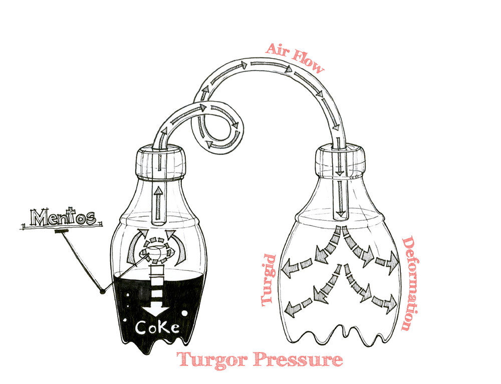 Recreating Turgor Pressure Study