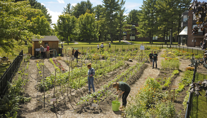 Students cultivating the new Garden! Photo credit: Skidmore College