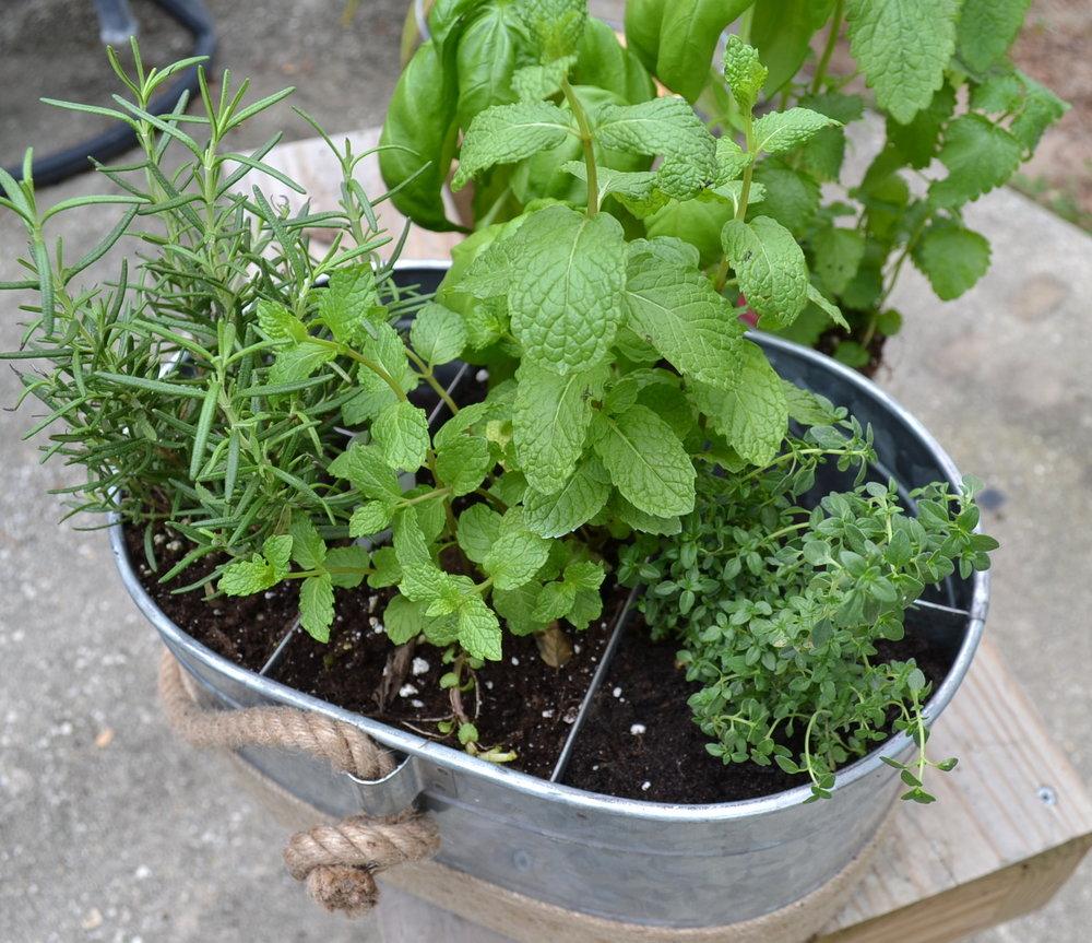 diy-indoor-herb-garden-plants.jpg