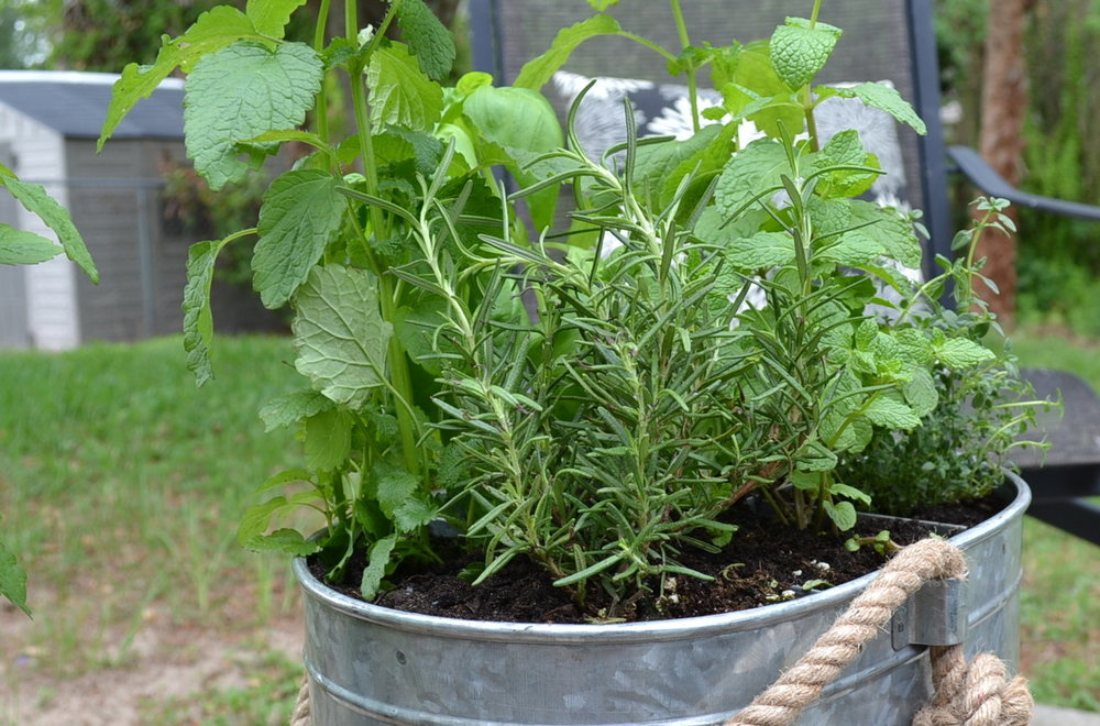indoor-herbs-to-plant-for-summer.jpg