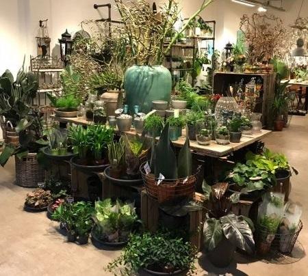 Plant & meer