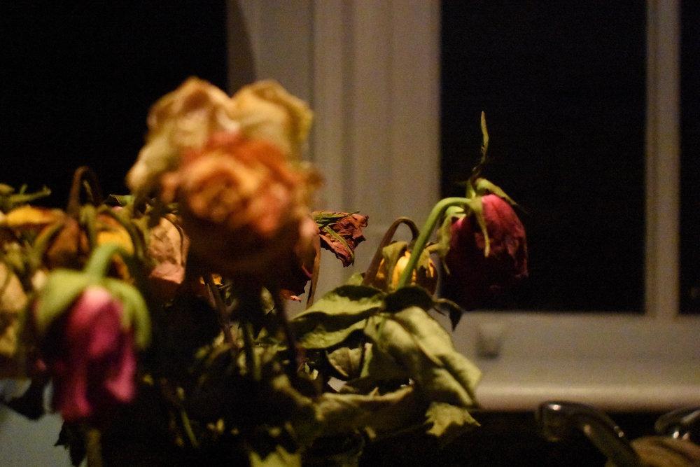 Dead roses.