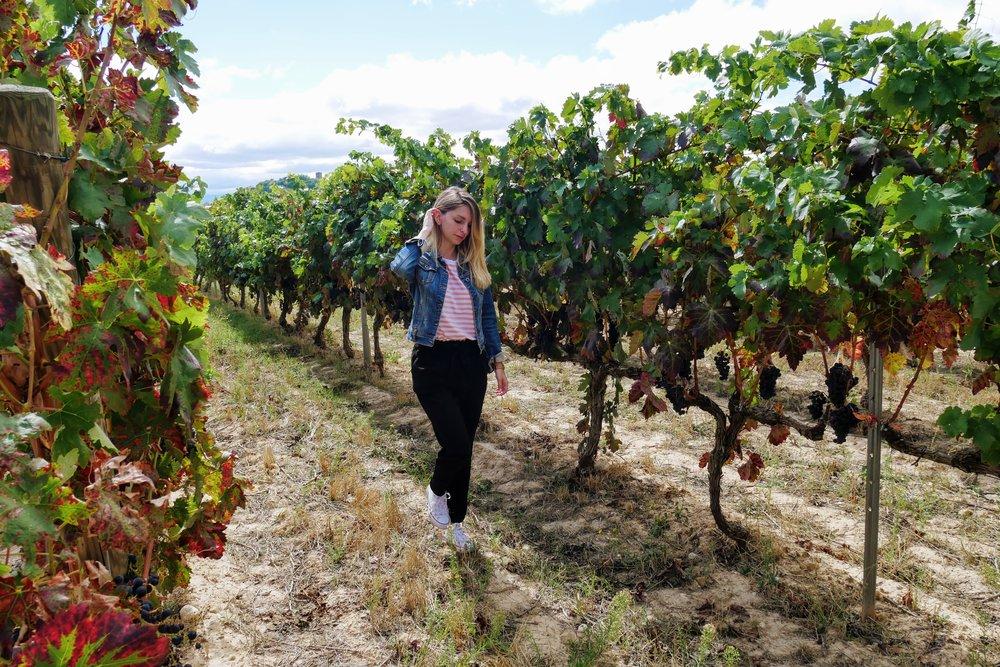 Bodegas Ysios La Rioja