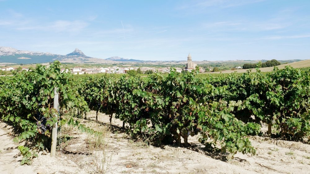 Vistas de La Rioja - Travelholics