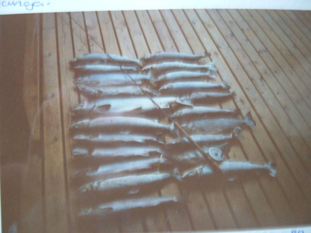 Storfangst 1988, fra en tid uten fangstbegrensninger i elv Foto: Lars Nielsen