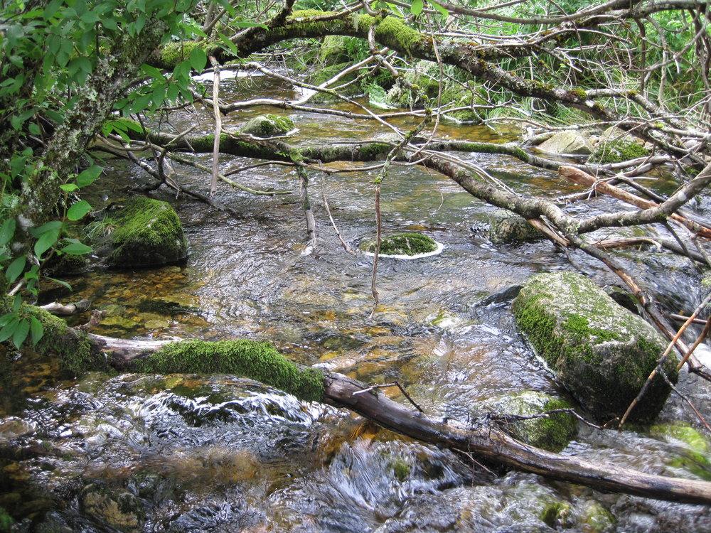 6 En produktiv gytebekk for sjøaure masse gytegrus, skjul, stein, døde og levende trær_Foto_Ulrich_Pulg_UniMiljø.JPG