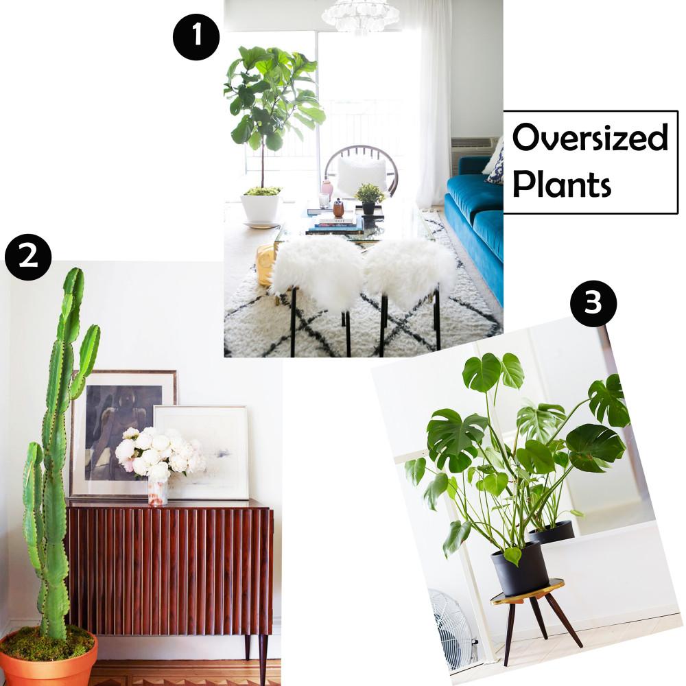 Oversized Plants