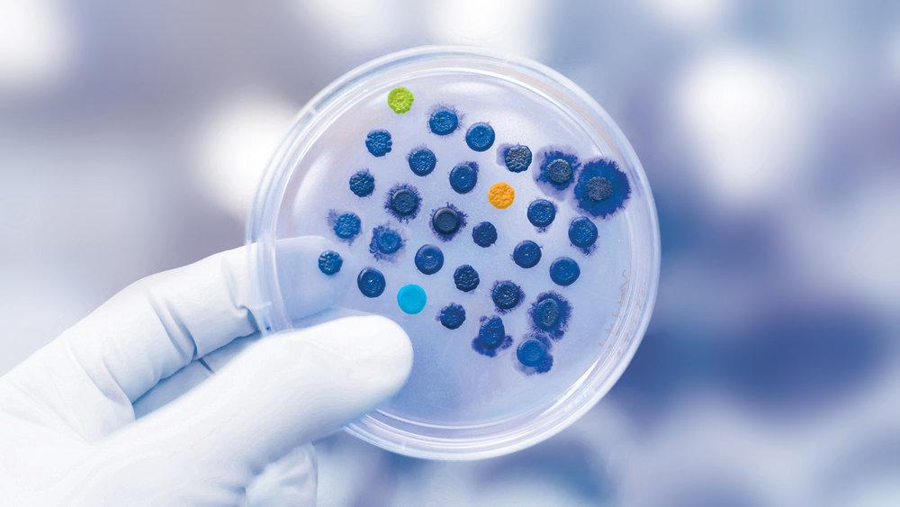 Petri Dish.jpg