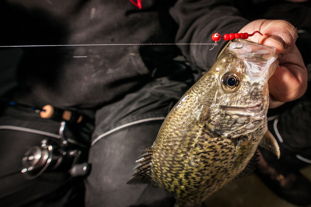 SD CRAPPIES 2013 (2 of 17).jpg