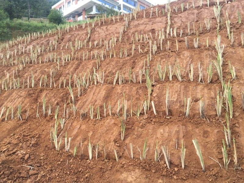 Grow For Change Nepal4.jpg