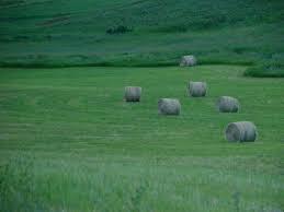 hay.png